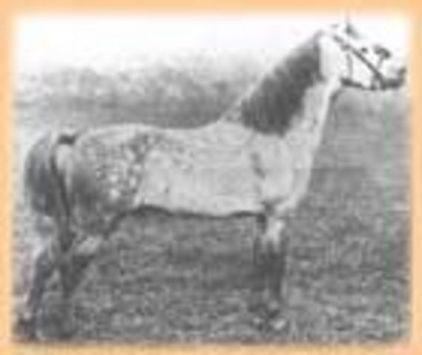 horse_grove_ballistite-big